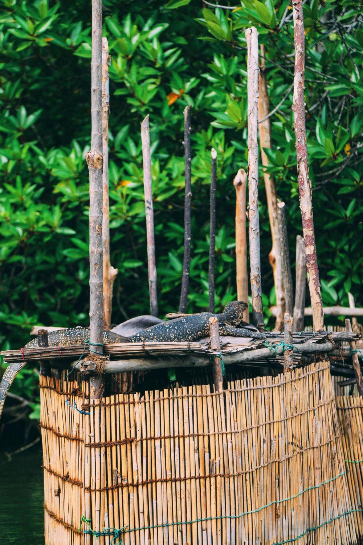A Journey Down The Madu Ganga River, Sri Lanka (10)