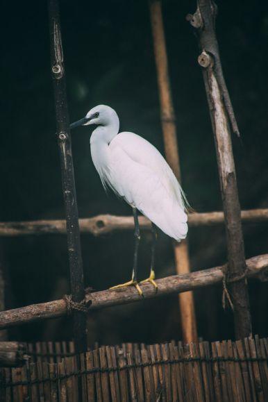 A Journey Down The Madu Ganga River, Sri Lanka (11)