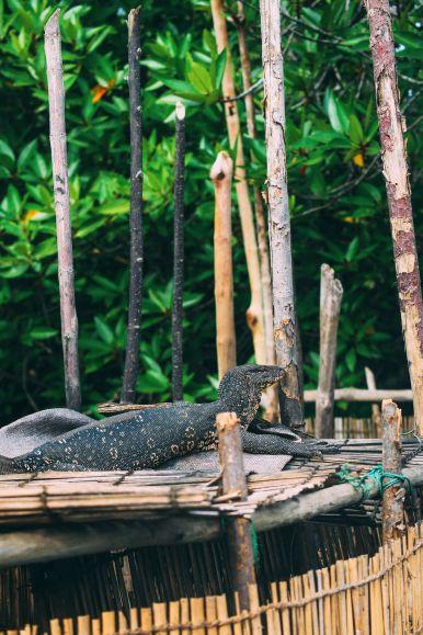 A Journey Down The Madu Ganga River, Sri Lanka (12)