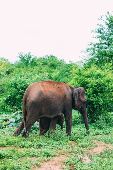 On Elephant Safari In Udawalawe, Sri Lanka (5)