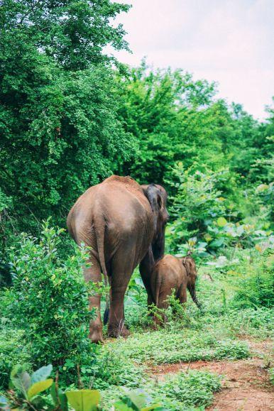 On Elephant Safari In Udawalawe, Sri Lanka (7)