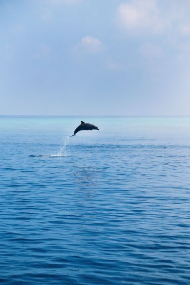 Swimming With Manta Rays And Dolphins In The Maldives (3)