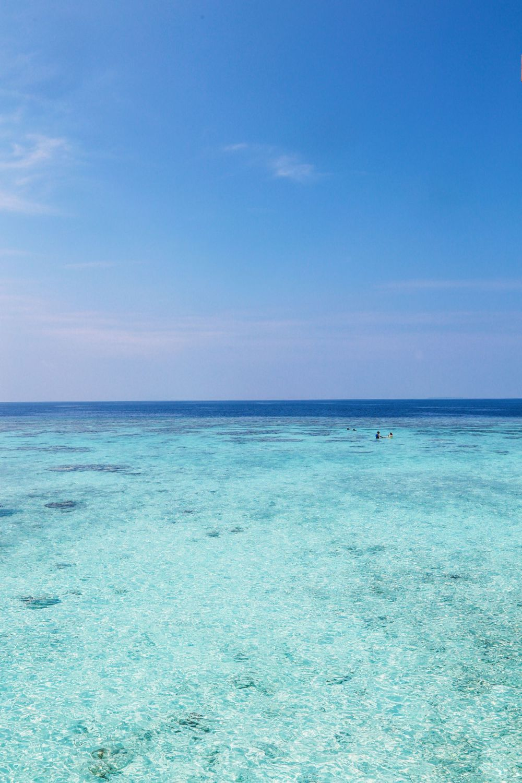Reef Explorers... At the Angsana Velavaru Maldives (15)