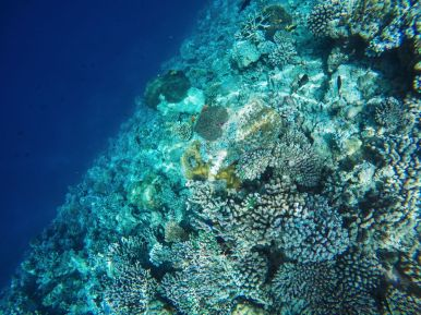 Reef Explorers... At the Angsana Velavaru Maldives (28)