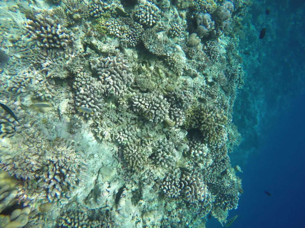 Reef Explorers... At the Angsana Velavaru Maldives (31)