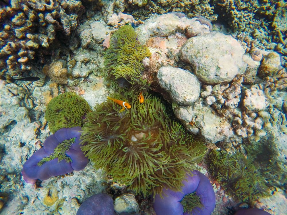 Reef Explorers... At the Angsana Velavaru Maldives (34)