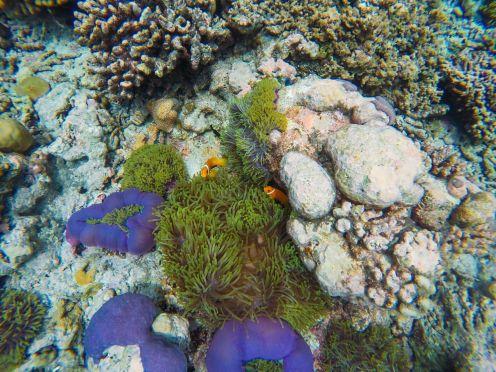 Reef Explorers... At the Angsana Velavaru Maldives (38)