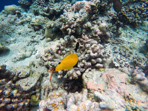 Reef Explorers... At the Angsana Velavaru Maldives (46)