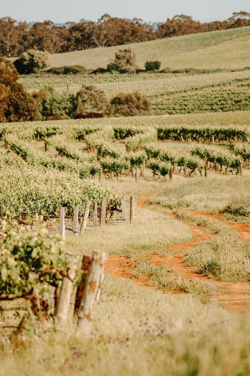 Best Vineyards In Australia (8)