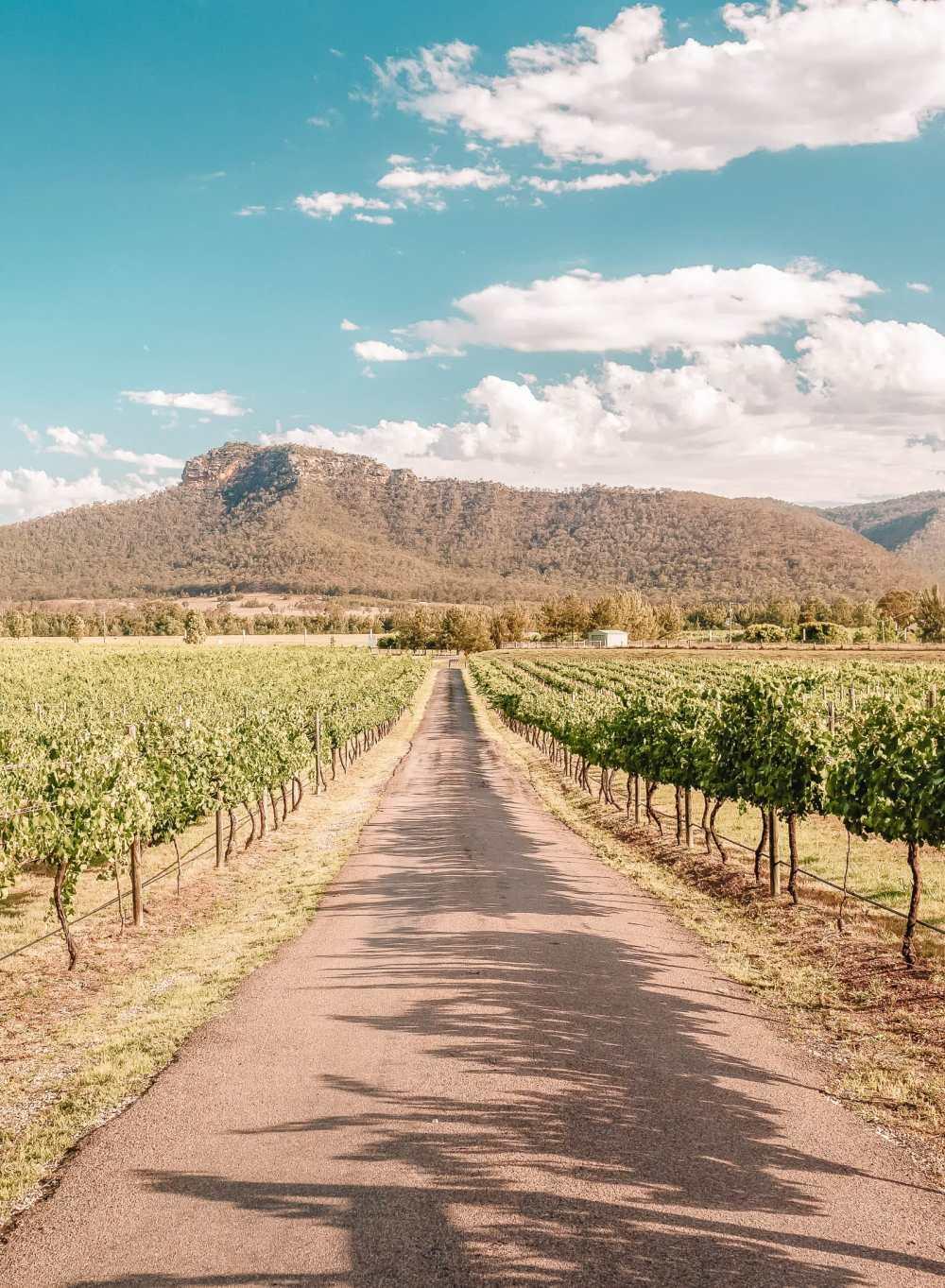 Best Vineyards In Australia (3)