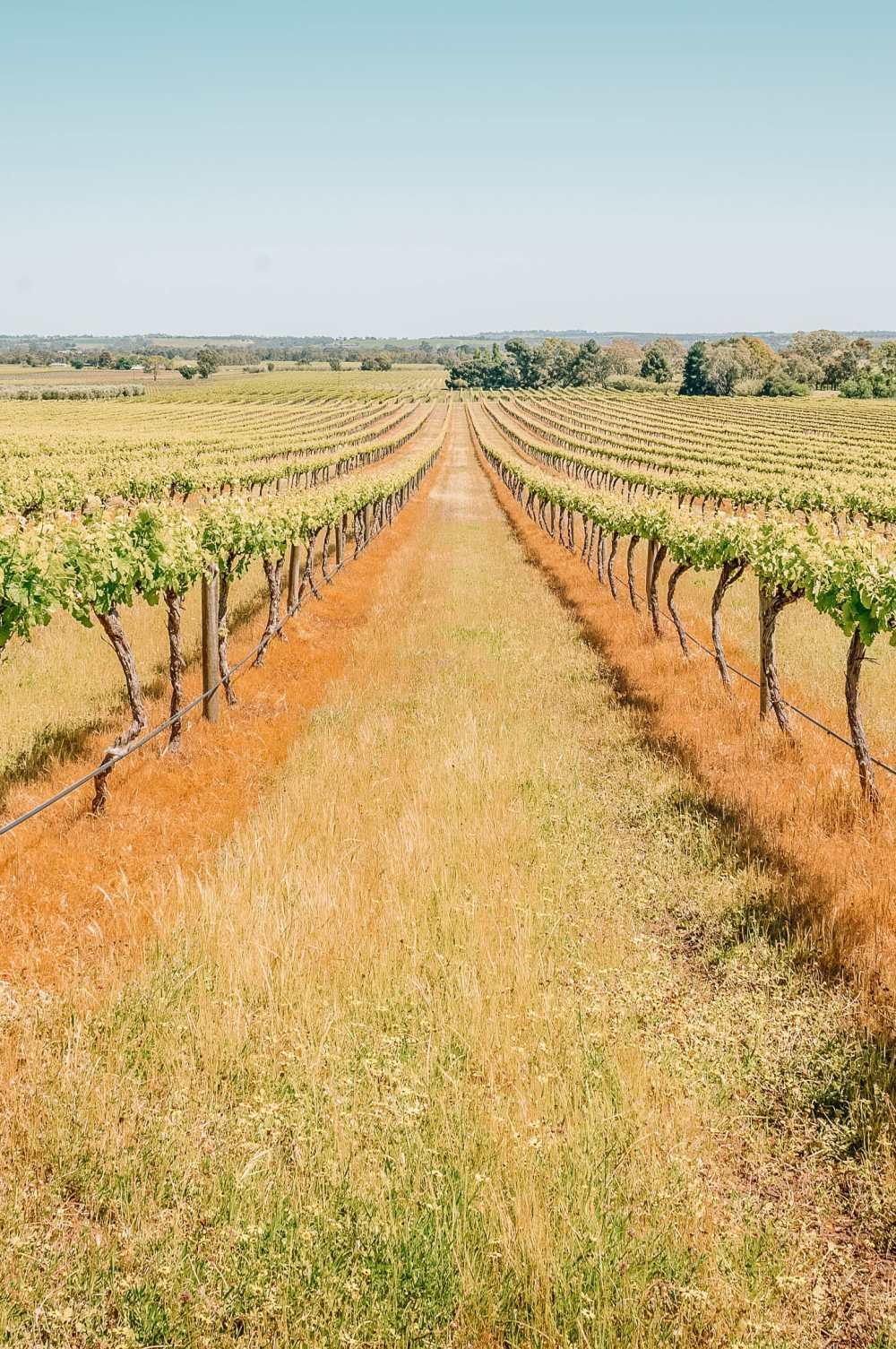Best Vineyards In Australia (2)