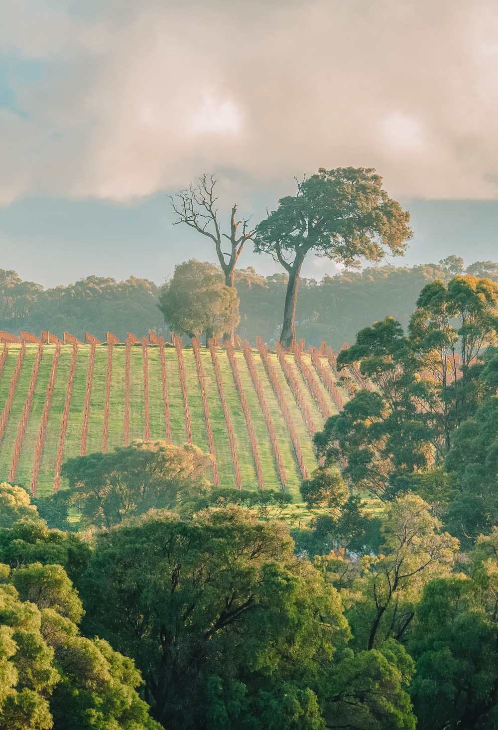 Best Vineyards In Australia (5)