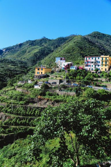 Afternoons In Cinque Terre, Italy... (33)