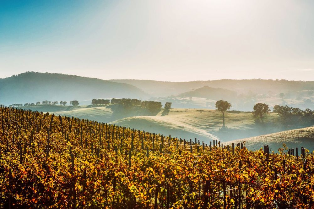 10 Incredible Vineyards You Have To Visit In Australia (9)