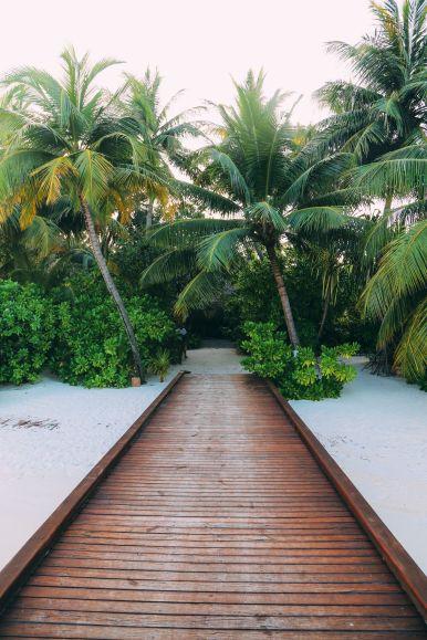 Maafushivaru, Birthing Dolphins And Swimming With Manta Rays... In The Maldives (11)
