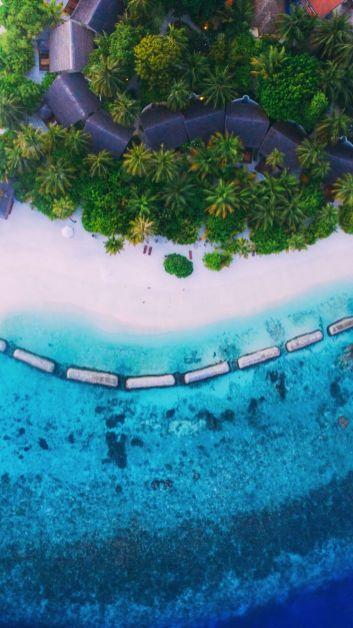 Maafushivaru, Birthing Dolphins And Swimming With Manta Rays... In The Maldives (2)