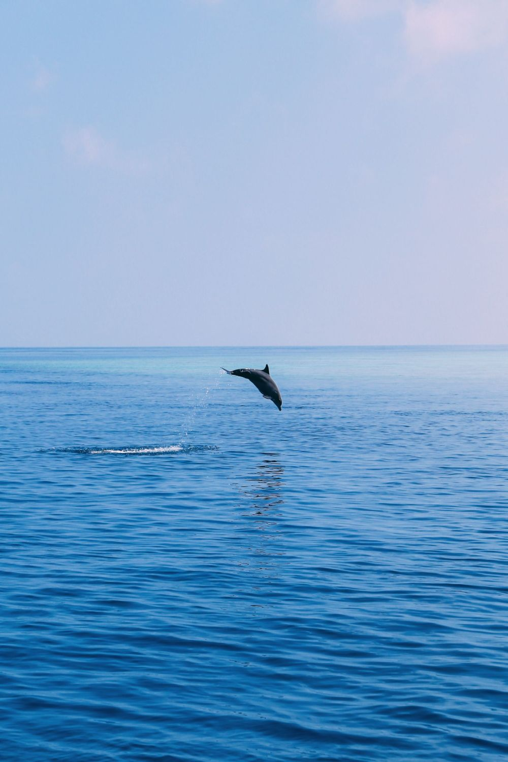 Maafushivaru, Birthing Dolphins And Swimming With Manta Rays... In The Maldives (39)
