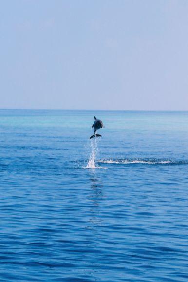 Maafushivaru, Birthing Dolphins And Swimming With Manta Rays... In The Maldives (47)