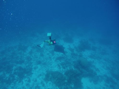 Maafushivaru, Birthing Dolphins And Swimming With Manta Rays... In The Maldives (55)