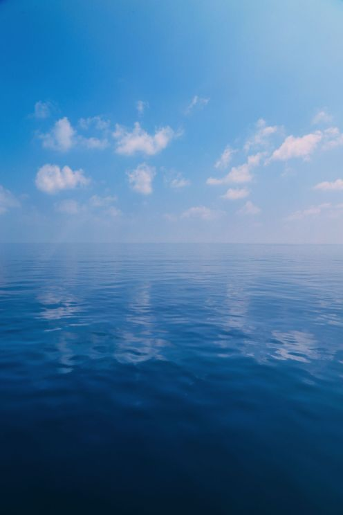 Maafushivaru, Birthing Dolphins And Swimming With Manta Rays... In The Maldives (71)
