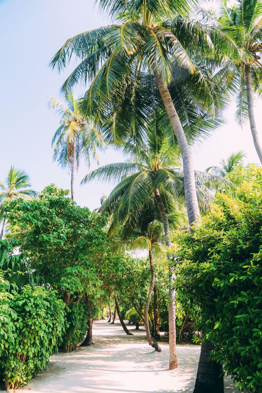 Sunshine and Island Hues... At Velassaru Maldives (11)