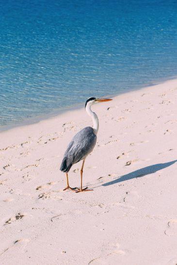 Beaches, Purple Sunsets And Island Hygge... At Velassaru Maldives (42)
