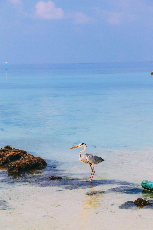 On Island Time… In Maafushivaru, Maldives (14)