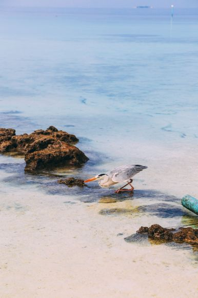 On Island Time… In Maafushivaru, Maldives (15)