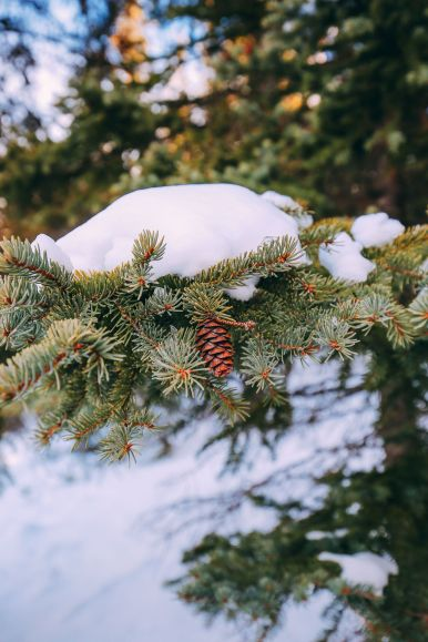 The Amazing Beauty Of Jasper National Park... In Alberta, Canada (47)