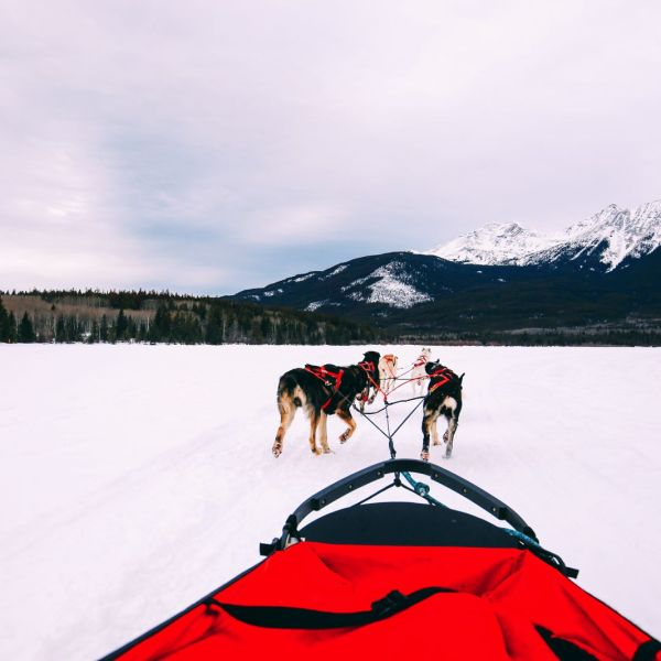 Dog Sledding In Jasper And Ice Hockey In Edmonton - 2 Canadian 'Must-Do's! (19)