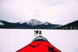 Dog Sledding In Jasper And Ice Hockey In Edmonton - 2 Canadian 'Must-Do's! (23)