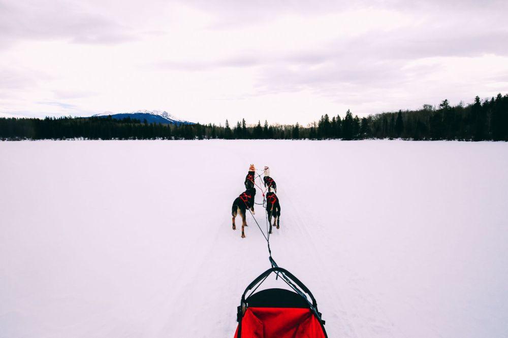 Dog Sledding In Jasper And Ice Hockey In Edmonton - 2 Canadian 'Must-Do's! (25)