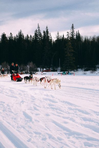 Dog Sledding In Jasper And Ice Hockey In Edmonton - 2 Canadian 'Must-Do's! (27)