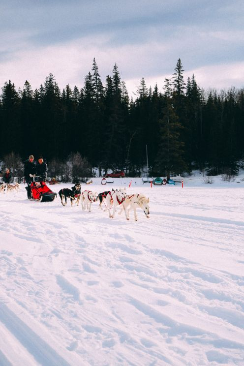 Dog Sledding In Jasper And Ice Hockey In Edmonton - 2 Canadian 'Must-Do's! (27)