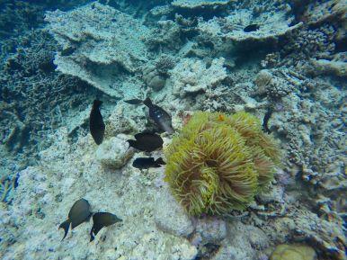 Swimming With Wild Turtles And Those Amazing Island Colours... At Kandolhu Island, Maldives (20)