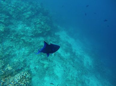 Swimming With Wild Turtles And Those Amazing Island Colours... At Kandolhu Island, Maldives (21)