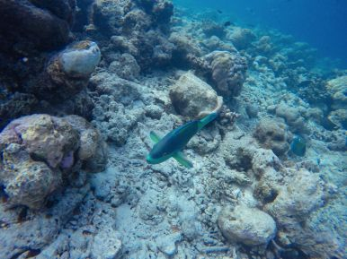 Swimming With Wild Turtles And Those Amazing Island Colours... At Kandolhu Island, Maldives (32)