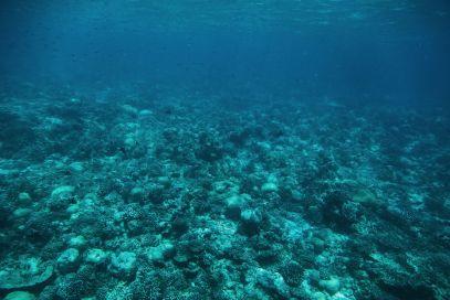 The Perfectly Lazy Day... In Kuramathi Island Maldives (16)