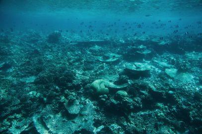 The Perfectly Lazy Day... In Kuramathi Island Maldives (22)
