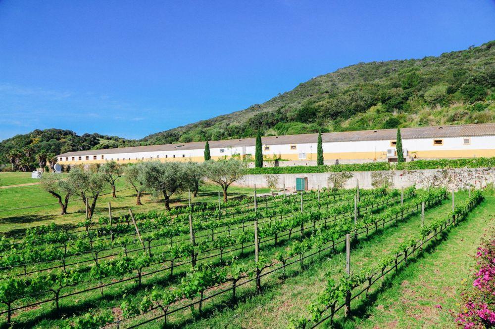 Vineyards, Seasides And Tapas... In Menorca, Spain (37)