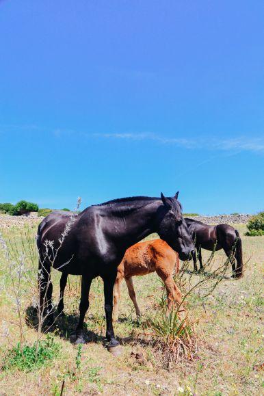 Vineyards, Seasides And Tapas... In Menorca, Spain (72)