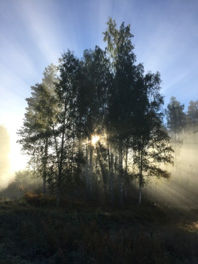 11 Places You Have To See When Visiting Sweden (8)