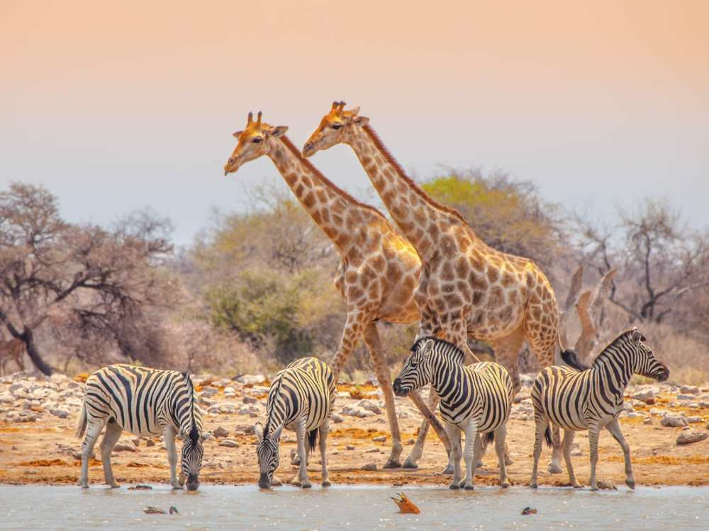 11 Beautiful Places You Have To See In Namibia (19)
