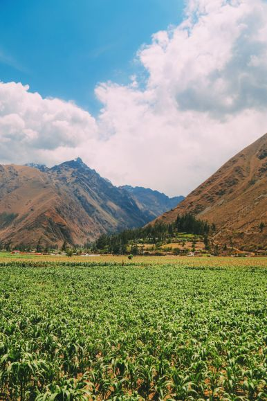 The Journey Up To Machu Picchu Village - Aguas Calientes, Peru (22)