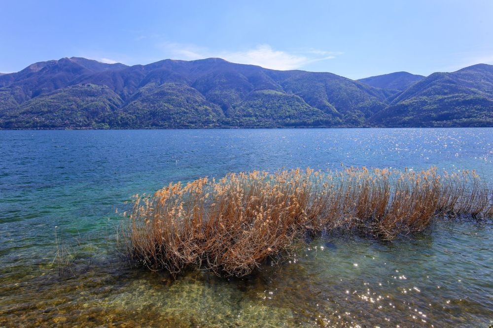 An Afternoon In One Of The Smallest Islands In Europe – Brissago Island (12)
