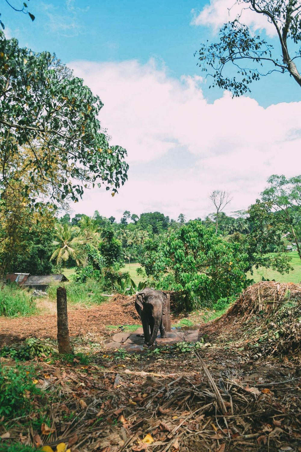 Here's Why You Should Never Visit Pinnawala Elephant Orphanage In Sri Lanka (5)