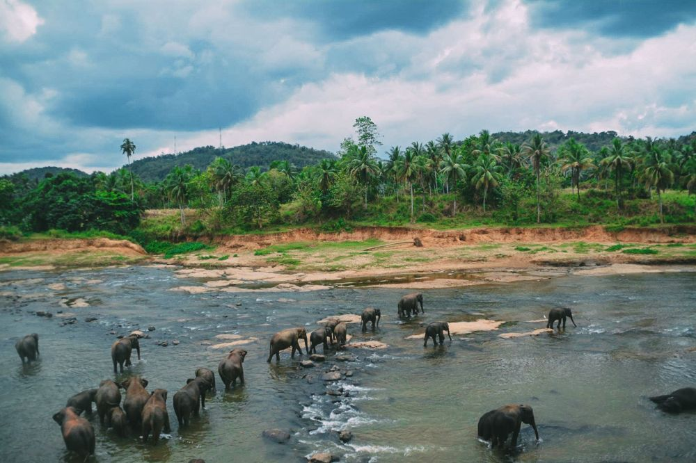 Here's Why You Should Never Visit Pinnawala Elephant Orphanage In Sri Lanka (6)