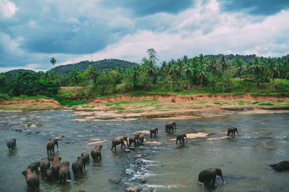 Here's Why You Should Never Visit Pinnawala Elephant Orphanage In Sri Lanka 2017 (10)