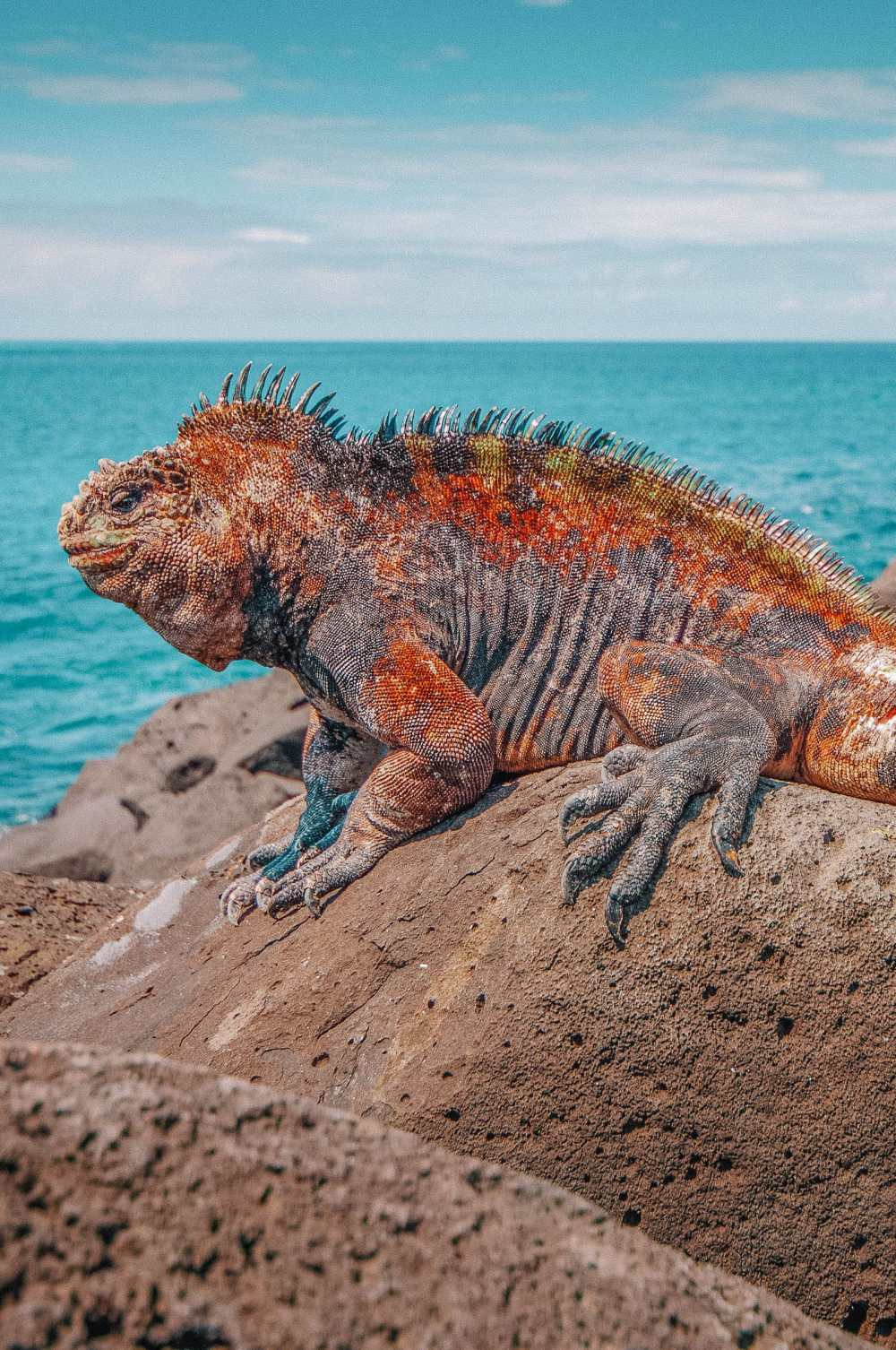 Animals To See In The Galapagos Islands (3)