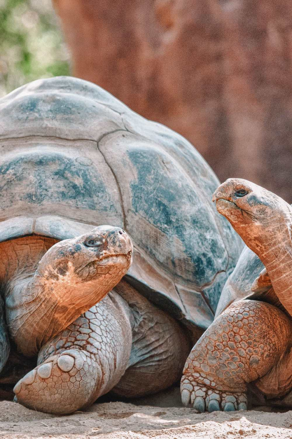 Animals To See In The Galapagos Islands (4)